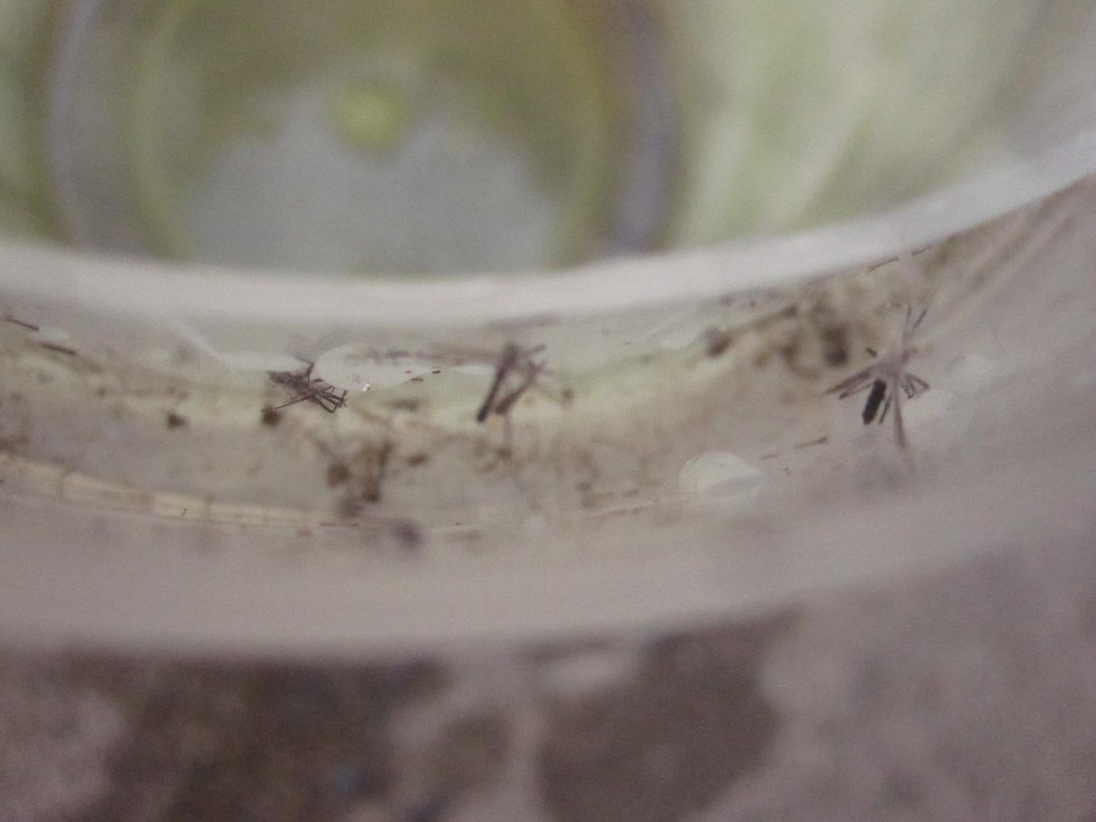 容器の縁に羽化した蚊の成虫の死骸が散乱している