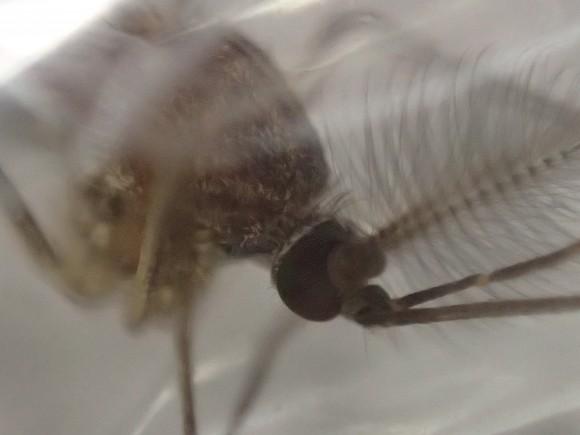 元気に飛び立とうと暴れる蚊を超接近モードで撮影した写真