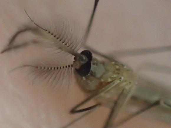 冷凍庫の寒さから解放され暖かくなり動き出した蚊
