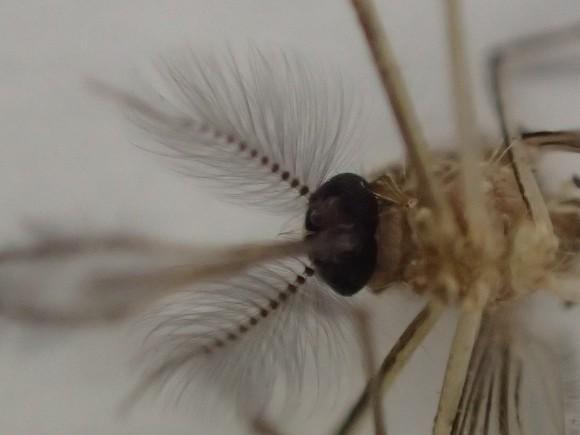蚊を下から見上げた頭部の超拡大アップ写真・画像