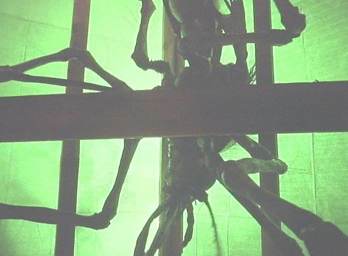 天井に潜んだ怪しい影のシルエットが蚊にそっくり