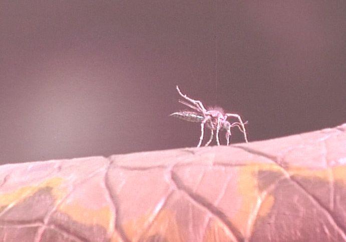 羽化した蚊がエイリアンの腕から血を吸い始めるシーン