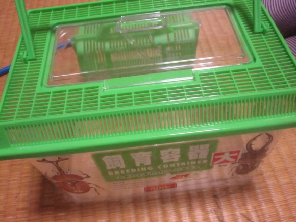 DAISO(ダイソー)の虫カゴ・昆虫飼育箱