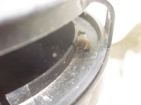 蚊とりん容器に糞を撒き散らす犯人はカタツムリ