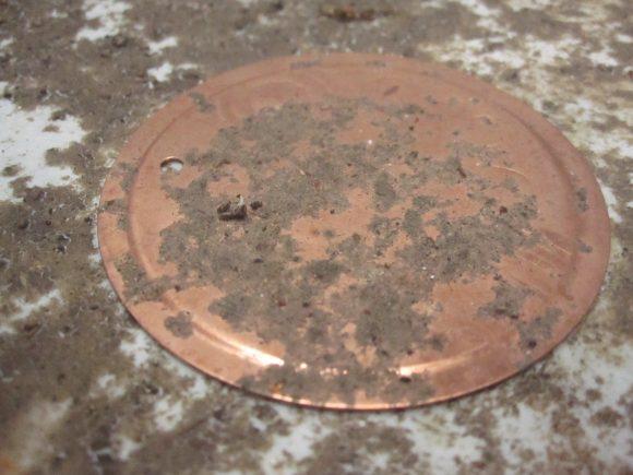 雨が降らない晴天が続いた時期は干上がってむき出しになる銅板プレート