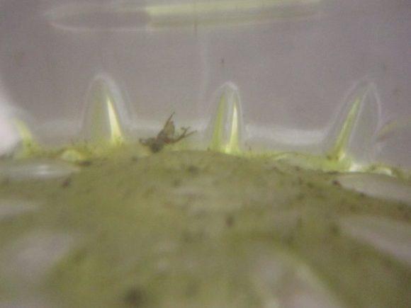 緑色に汚れた底には小さな虫が沈んでいる