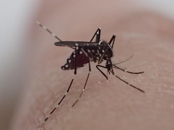 驚異的なスピードで短時間で人間の血を吸う蚊