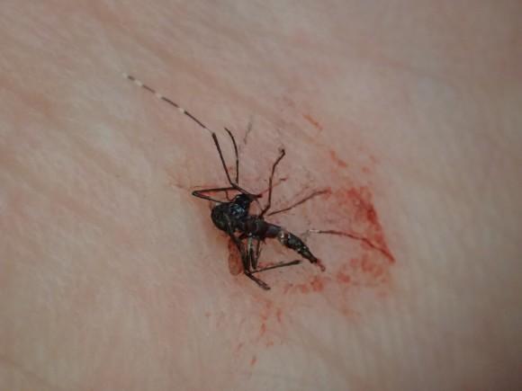 平手打ちで退治した蚊の死体・屍骸