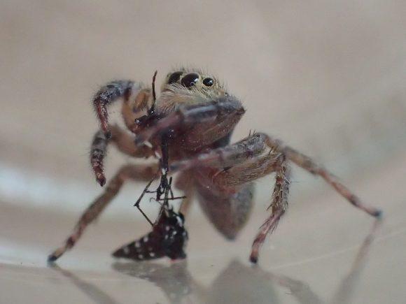 食べ終えた蚊を下にポトンッと落とした瞬間