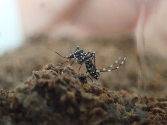 瓶を揺らして刺激を与えても微動だにせず固まったままの蚊