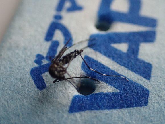 青白くなり薬剤が薄れたマットですら蚊には大きなダメージを与える