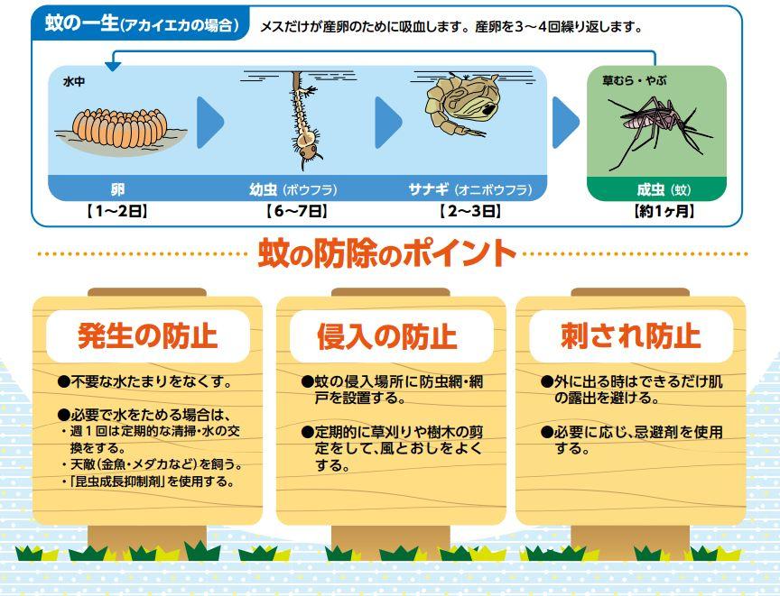 蚊の発生を防ぎましょう(大田区保健所)