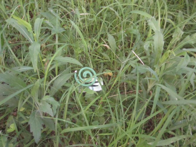 刈る場所を区分けして目標地点にアロマ蚊取り線香を設置する