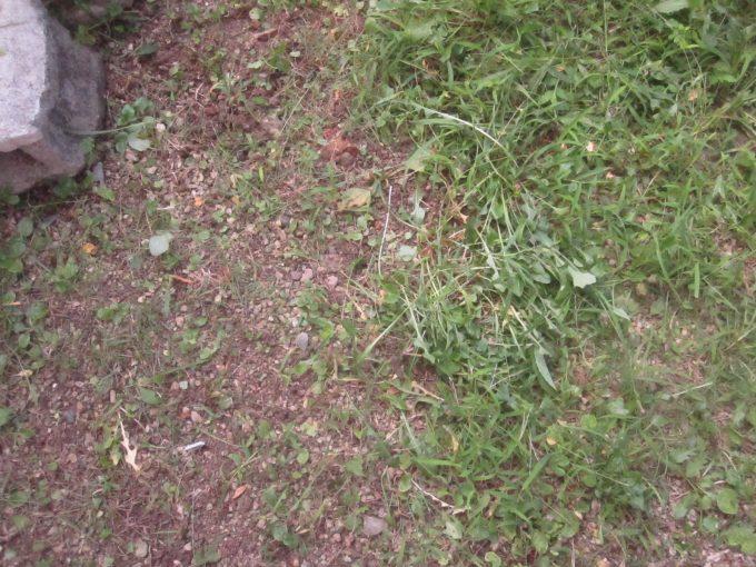 草刈り・草むしりのbefore afterの違いを撮影した写真