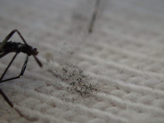 蚊の黒い鱗粉が白い生地に付着した拡大ズーム写真