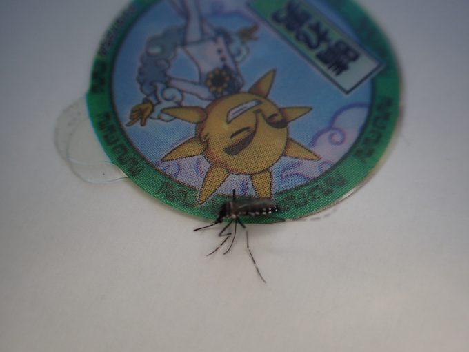 シールと一緒に閉じ込めた1時間後、動かなくなったヤブ蚊