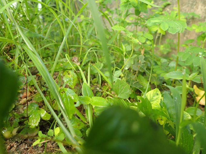 生い茂った雑草ジャングルを撮影した写真・画像