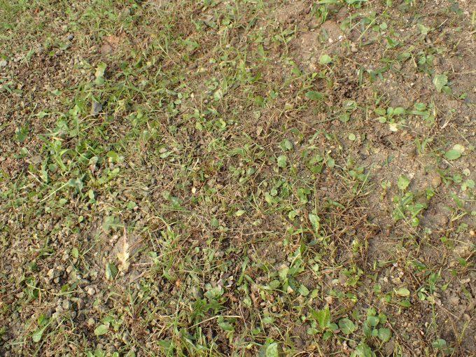 生い茂っていた雑草を刈り終え地面の土が剥き出しになった図