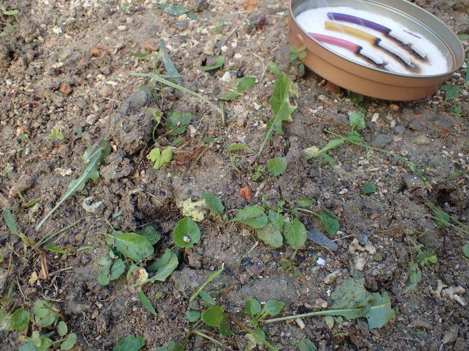 蚊取り線香を肌身離さず側に置きながら草刈り進める様子