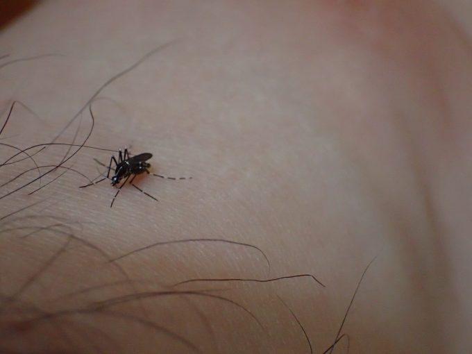 素足・足首から血を吸う害虫ヤブ蚊・ヒトスジシマカ