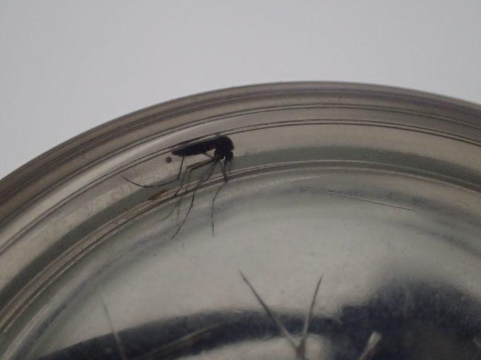 数時間後、香りから逃げるように隅っこに体を押し込んで隠れる蚊