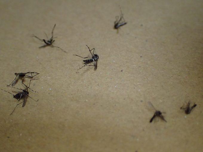 一撃必殺の威力を誇る電撃殺虫器は小さい子供には危険・・・