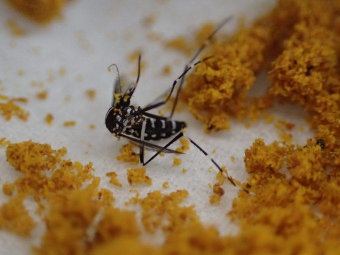 まさかのカレー粉に蚊除け・蚊を退治する効果があるとはビックリ仰天!
