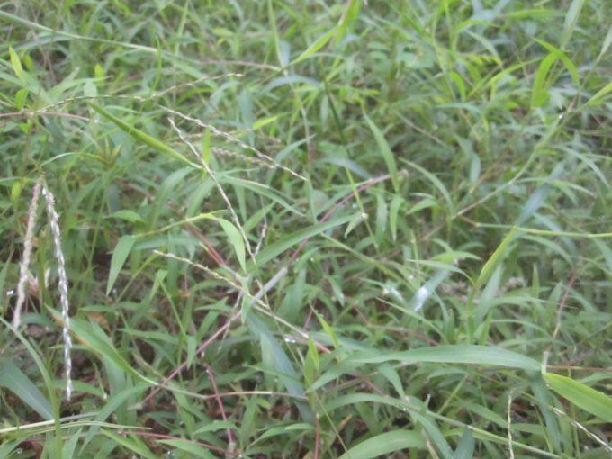 雑草が生い茂った場所の草刈で実際に蚊よけ匂袋を使用してみる