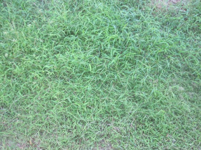 梅雨シーズンに降った恵みの雨で伸びまくった雑草