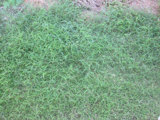 蚊取り線香を使用せずニンニク片だけで野外の草刈り作業に挑む!