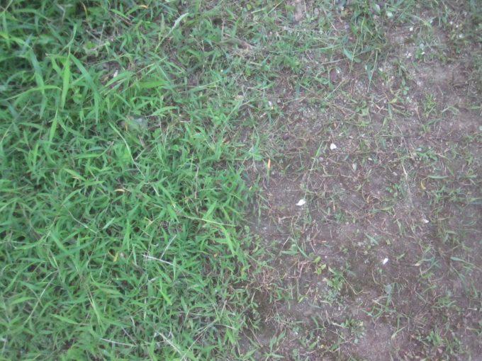 雑草が生い茂った場所と刈り取った場所のビフォーアフター比較写真