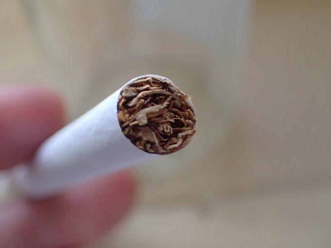 開封したての新鮮なタバコの葉をほぐして取り出す