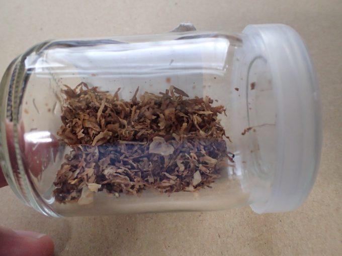 翌日、ヒトスジシマカは、タバコの葉の中でひっくり返って動かなくなっていた・・・