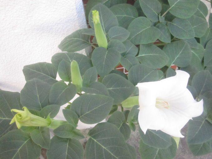 自然と勝手に生えて成長して大量の花を咲かせた謎の植物