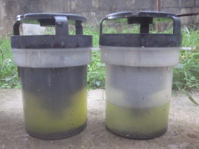 """雨水交換から1ヶ月が経過して水位が下がったり汚れたボウフラ駆除""""蚊とりん"""""""