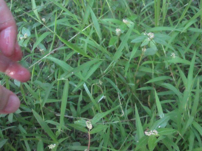 害虫ヤブ蚊の成虫が潜み隠れる雑草が生い茂った草むら