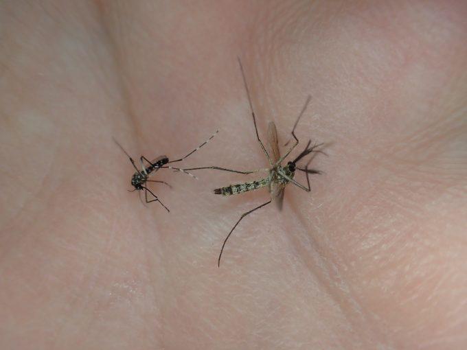 危うく台風で空腹だった蚊に血を吸われるところだった(汗)