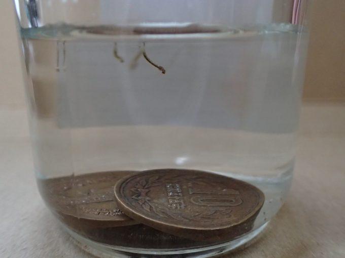 """害虫""""蚊""""の赤ちゃんボウフラが泳ぐ水の中に10円銅硬貨を投入して駆除を試みる実験開始!"""