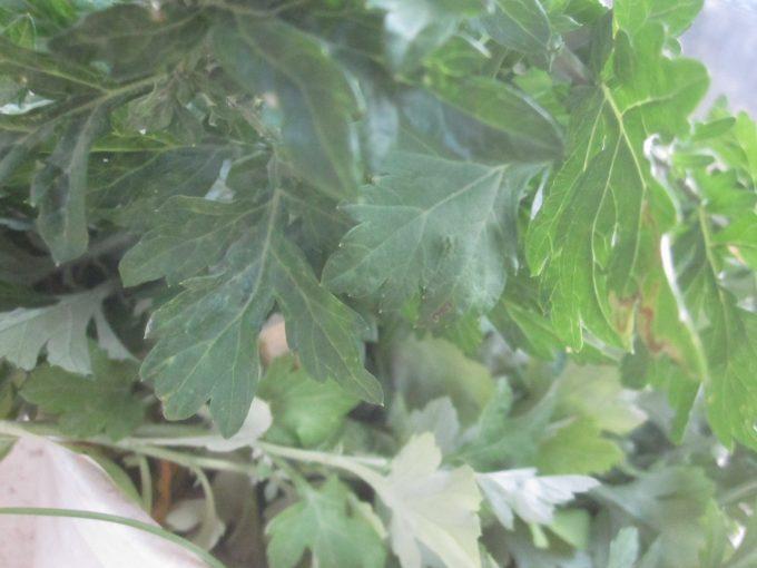 干す前の青々しい雑草の写真