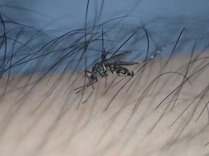 歩くと腕毛に足を取られて進まず、飛び立とうとしても毛が羽にぶつかり邪魔をする