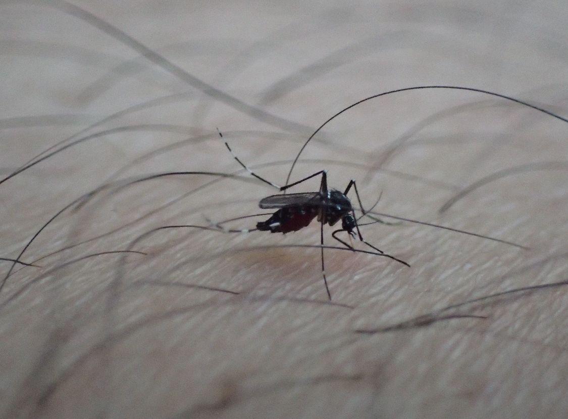 制汗剤、薬用ローションを塗った箇所が蚊に刺され血を吸われた