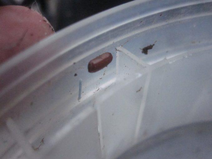 容器の縁(ふち)に産み付けられたゴキブリの卵らしき物体