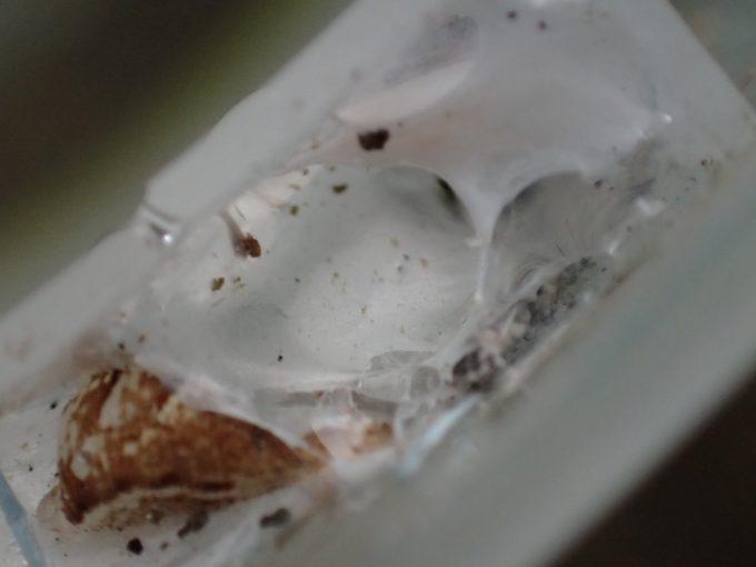 容器の縁(ふち)に蜘蛛の巣?が作られていた