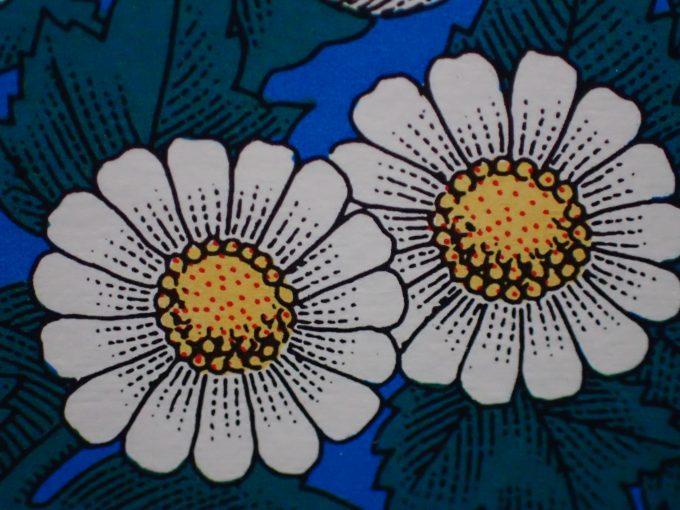 殺虫効果のある除虫菊(じょちゅうぎく)の花イラスト