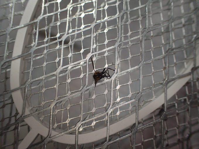 [電撃殺虫ラケット]乾電池の電流で感電死した害虫の蝿(ハエ)