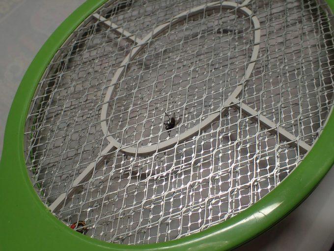 電撃殺虫ラケットの金網に絡め取られて死んだハエ