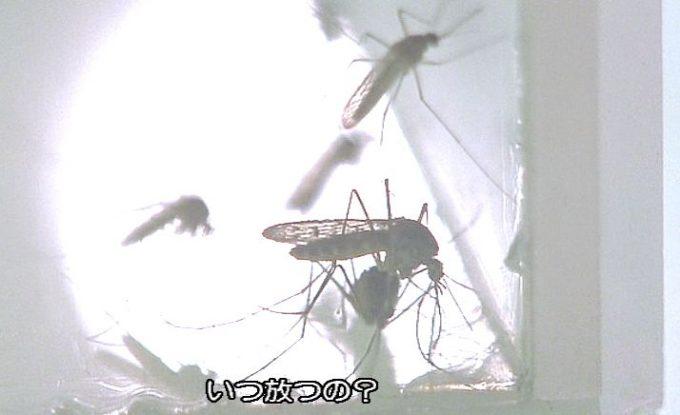 ケースの中で蠢く大量の蚊の成虫たち