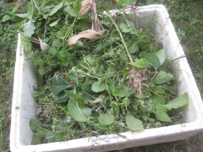 数分後には箱いっぱいに積み上がった雑草