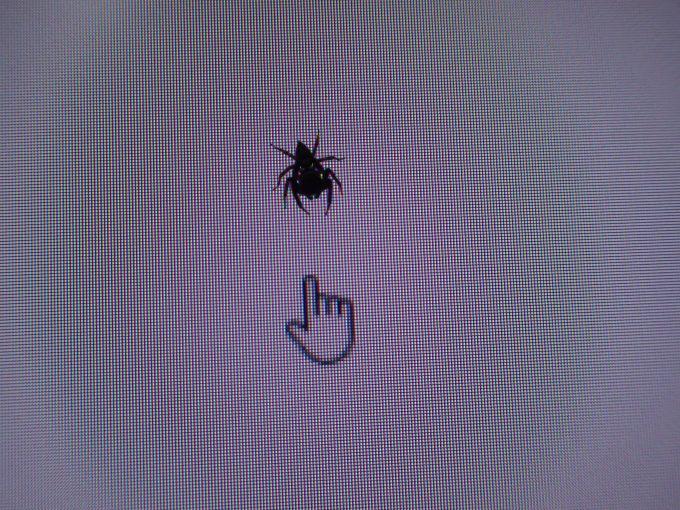 パソコン画面上の矢印(マウスポインター・カーソル)を警戒するハエトリグモ