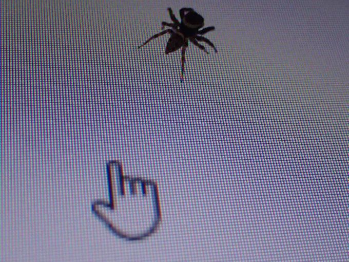 マウスポインターをハエトリグモの背後に移動させると・・・